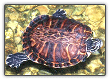 McEnery Turtle Farm